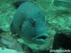 Отдых и развлечения в Гонконге, Знаменитый аквариум в Оушен парке
