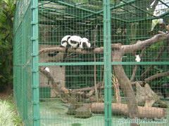 Бесплатный парк в Гонконге, Зверюшки (вернее их задняя часть)