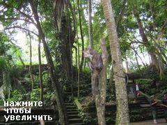 Развлечения и отдых на Бали, Экскурсия в лес обезьян)