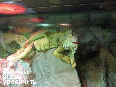 здание 63, Сеул, Южная Корея, дракон в аквариуме