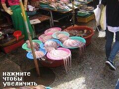 Рыбный рынок на улице в Пусане