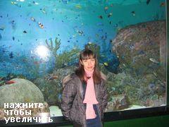 Развлечения и аттракционы в COEX Mall в Сеуле, рифовые рыбки в аквариуме