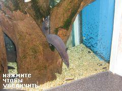 Развлечения и аттракционы в COEX Mall в Сеуле, висячие рыбы в аквариуме