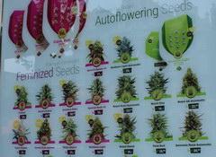 Цены в Амстердаме в кофешопе, Цены на семена конопли