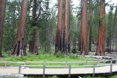 Sequoia Park, Huge sequoias in Yosemite Park Park